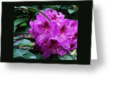 Purple Azalea Greeting Card