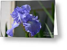 Purple Beauty Iris Greeting Card