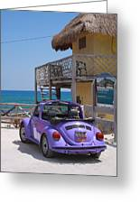 Purple Beetle Beachside Cozumel Mexico Greeting Card