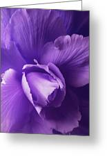 Purple Begonia Flower Greeting Card
