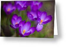 Purple Blanket Greeting Card