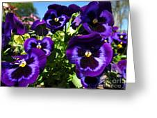 Purple Blooms Greeting Card