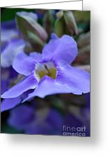 Purple Bokeh Greeting Card