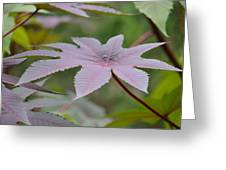 Purple By Nature II Greeting Card
