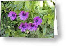 Purple By The Sea Greeting Card