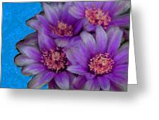 Purple Cactus Flowers Greeting Card