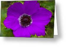 Purple Calanit Magen Greeting Card