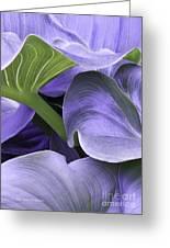 Purple Calla Lily Bush Greeting Card