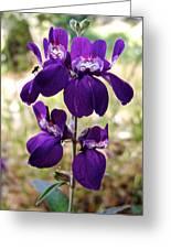 Purple Chinese Houses In Park Sierra-ca Greeting Card