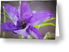 Purple Clematis Close Up Greeting Card