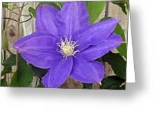 Purple Clematis Full Bloom Greeting Card