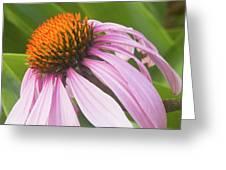 Purple Cone Flower Echinacea Greeting Card