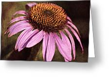 Purple Cone Flower II Greeting Card