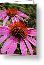 Purple Cone Flower With Bee Greeting Card