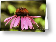 Purple Coneflower - Single Greeting Card