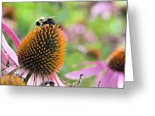 Purple Coneflower And Guest Greeting Card