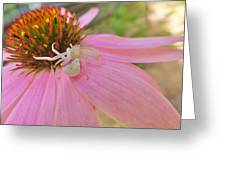 Purple Coneflower With Crab Spider Greeting Card