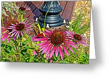 Purple Coneflowers By Former Railroad Depot In Pipestone-minnesota Greeting Card