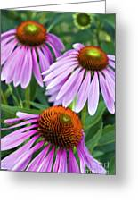 Purple Coneflowers - D007649a Greeting Card