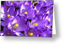 Purple Crocus Spring Welcome Greeting Card