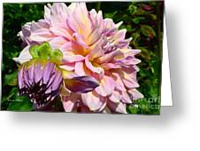 Purple Dahlia With Bud Greeting Card
