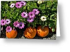 Purple Daisies And A Touch Of Orange Greeting Card