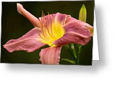 Purple Daylily Greeting Card