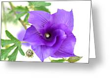 Purple Delicacy Greeting Card