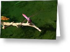 Purple Dragonfly Greeting Card by Ella Char
