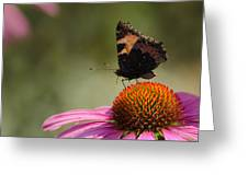 Purple Echinacea Flower Greeting Card