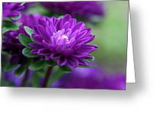 Purple Escape  Greeting Card