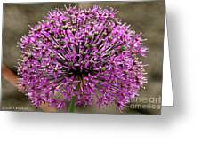 Purple Explosion Greeting Card