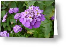 Purple Eye Candy That Pops Greeting Card