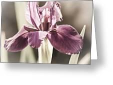 Purple Fairytale Greeting Card