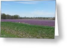 Purple Field Greeting Card