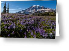 Purple Fields Forever And Ever Greeting Card