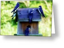 Purple Finch 2 Greeting Card