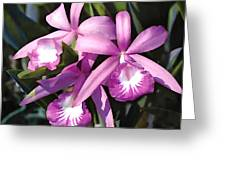 Purple Flock Of Cattleya Orchids Greeting Card