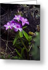 Purple Flower At Enchanted Rock Greeting Card