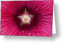 Purple Flower Extreme Macro Greeting Card