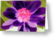 Purple Flower - Photopower 257 Greeting Card