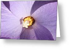 Purple Flower Square Greeting Card