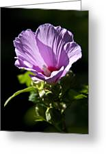 Purple Flower With Dark Background Greeting Card