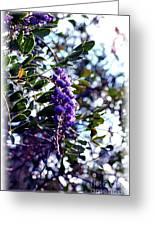 Purple Flowering Tree Greeting Card