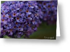 Purple Flowers 1 Greeting Card