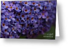 Purple Flowers 2 Greeting Card