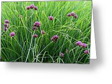 Purple Flowers And Grasses Greeting Card