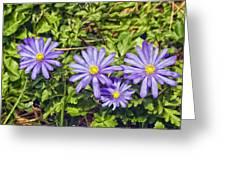 Purple Flowers Lookiing Like Daisies Greeting Card