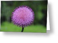 Purple Fuzz Greeting Card
