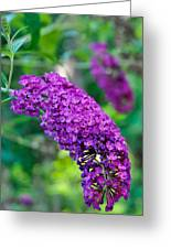 Butterfly Bush Garden Flower Greeting Card